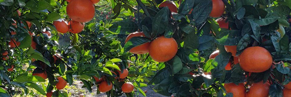 Sürdürebilir tarımsal faaliyetler